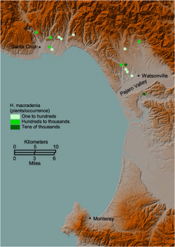 Distribution of Holocarpha macradenia.