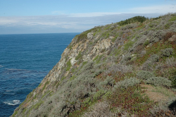 Habitat of A. edmundsii taken along the Big Sur coast, Monterey County by Dean W. Taylor