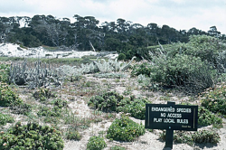 Photo taken at Spanish Bay Golf Course mitigation site, Monterey County © Dean W. Taylor.