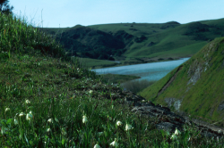 Photo taken at Nicasio Reservoir, Marin County © Stuart McKelvey and CNPS.