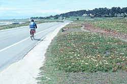 Photo taken along 17-Mile Drive © 2001 Dean W. Taylor.