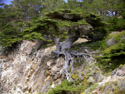 Photo taken at Point Lobos © 2009 Keir Morse.