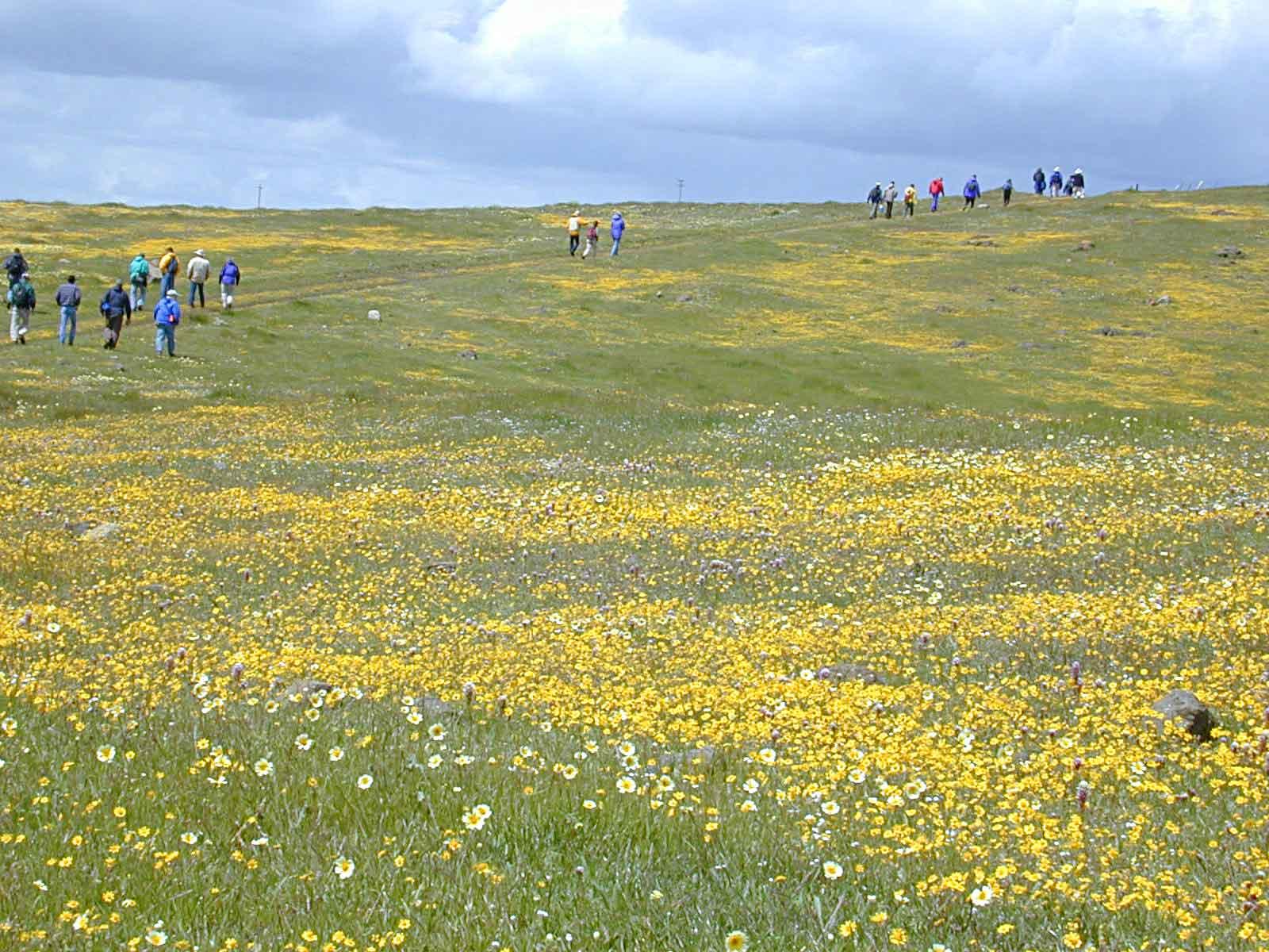 Coyote Ridge Serpentine Grasslands Field Trip program image