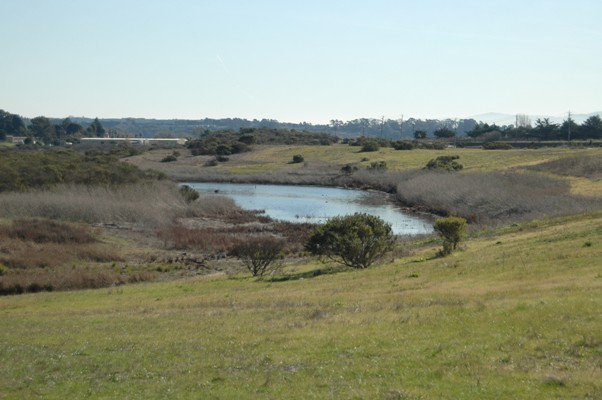 Jurisdictional Delineation of Waters of the U.S., Including Wetlands On the California Coast: Legal and Ecological Protocols For Diverse and Changing Landscapes program image