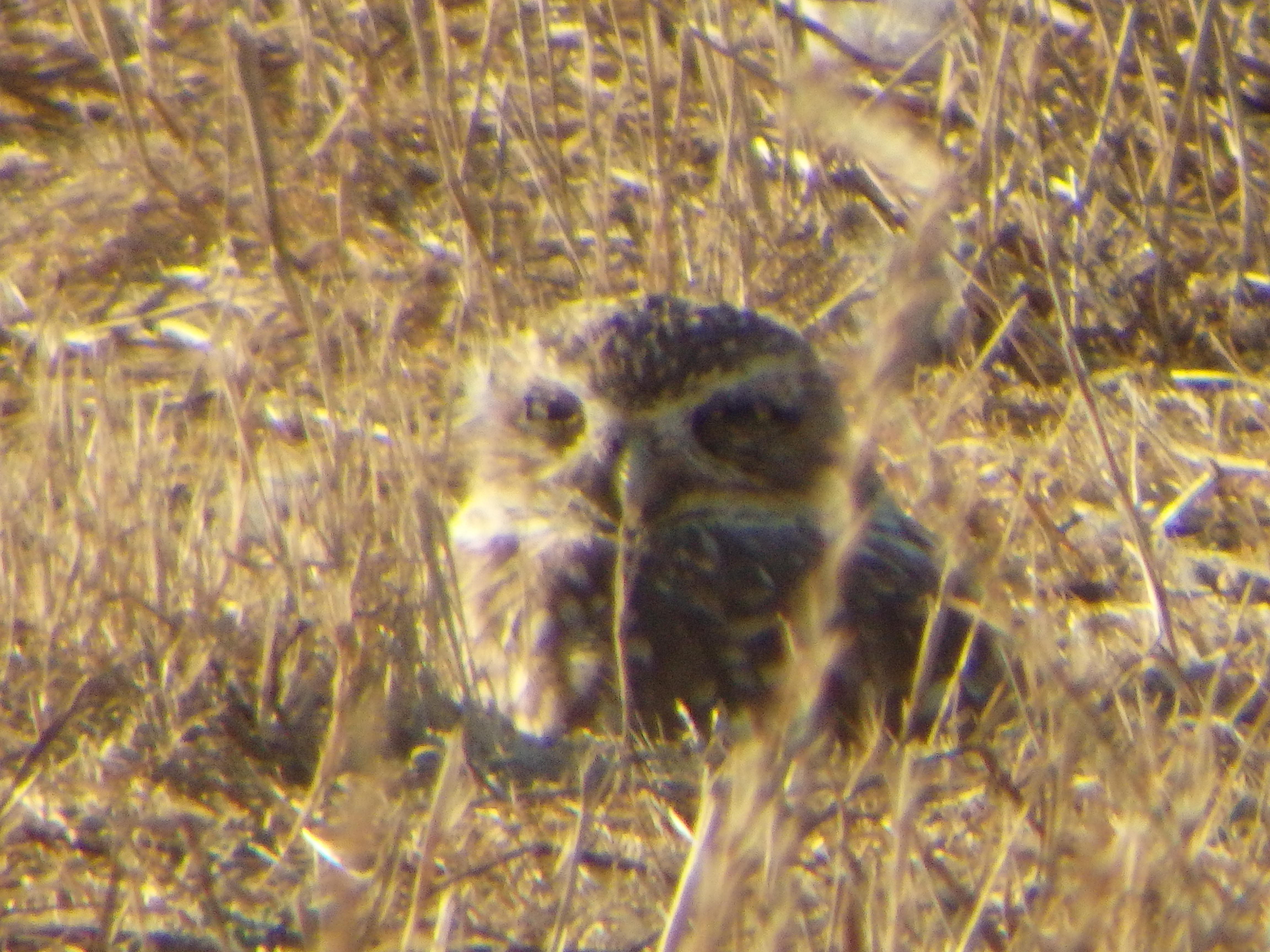 Western Burrowing Owl Workshop 2015 program image